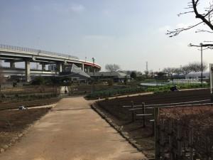 都市農業公園の畑