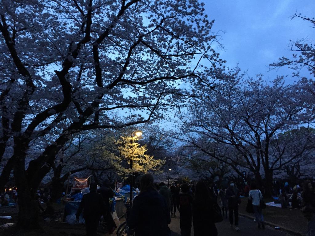 代々木公園の夜桜