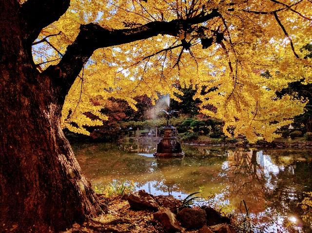 日比谷公園の紅葉2