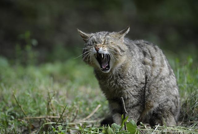 猫の疲れた顔