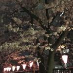 目黒川の夜桜その1